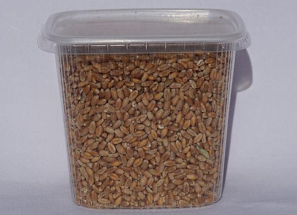 Keimfähiger Weizen im 500ml Becher