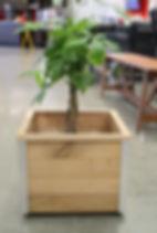 Planter Box.JPG