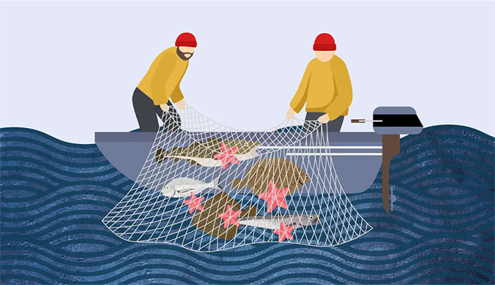 Illustration de deux pêcheurs remontant un filet contenant des poissons de saison d'hiver comme le merlu, la dorade grise, le turbot ou encore la limande sole.