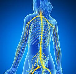 Nervous-system.jpg