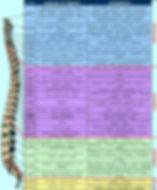 colonne vertébrale, système nerveux, chiropraxie, chiropracteur