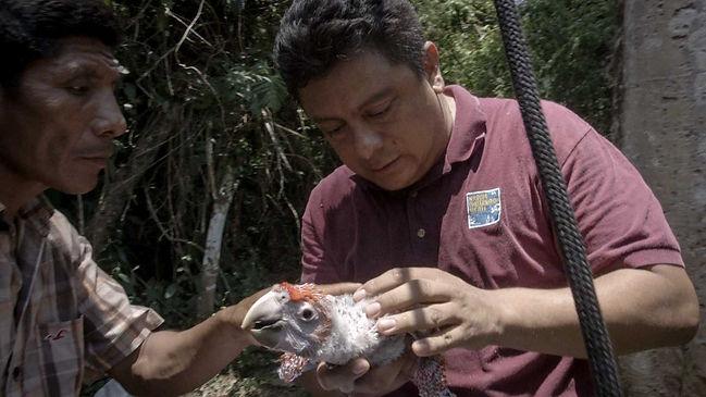 selva-maya-2.jpg