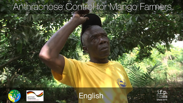 Anthracnose Control