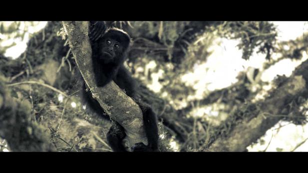 Selva Maya