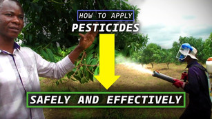 How to apply Pesticides