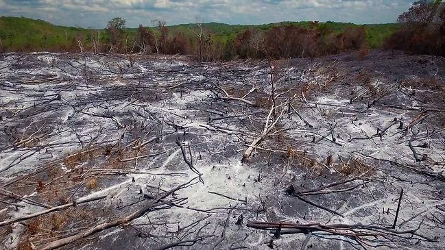 selva-deforest.jpg