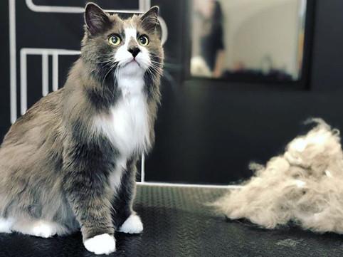 Абсолютное очарование кота Леопольда🐾😻
