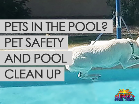 Pets In The Pool: Pet Safety & Pool Clean Up