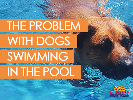 The Problem With Dogs Swimming In The Pool