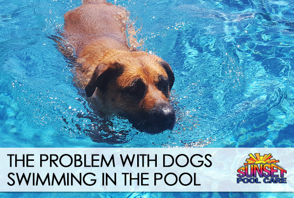 should dogs swim in the pool?
