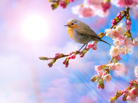 Spring: Season of Creativity, Renewal & Growth