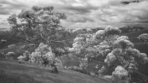 River Reds, Adelaide Hills, South Australia
