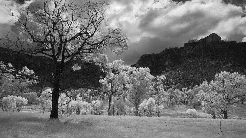 Backlit, Wolgan Valley NSW