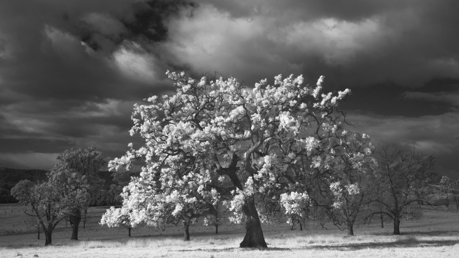 Tree of Life, Bega NSW