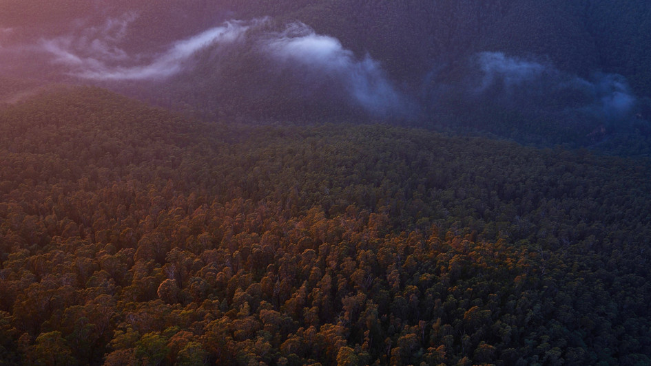 Wafting Air, Blue Mountains National Park, NSW
