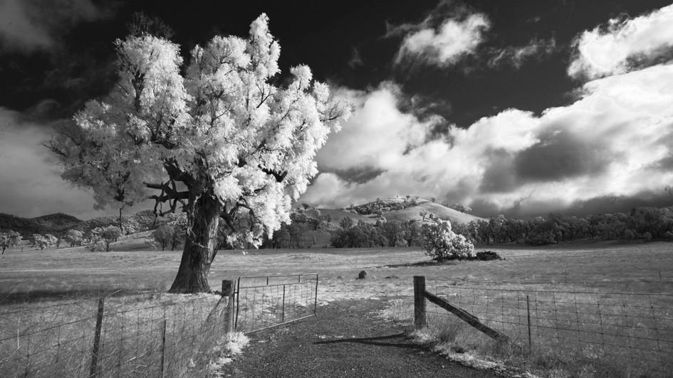 Tree & Gate, Lue NSW