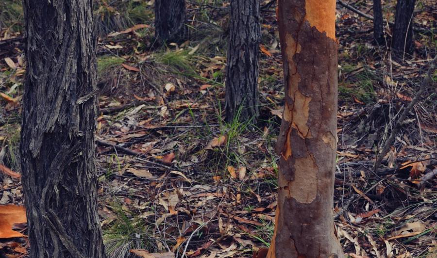 Individual, Yengo National Park NSW
