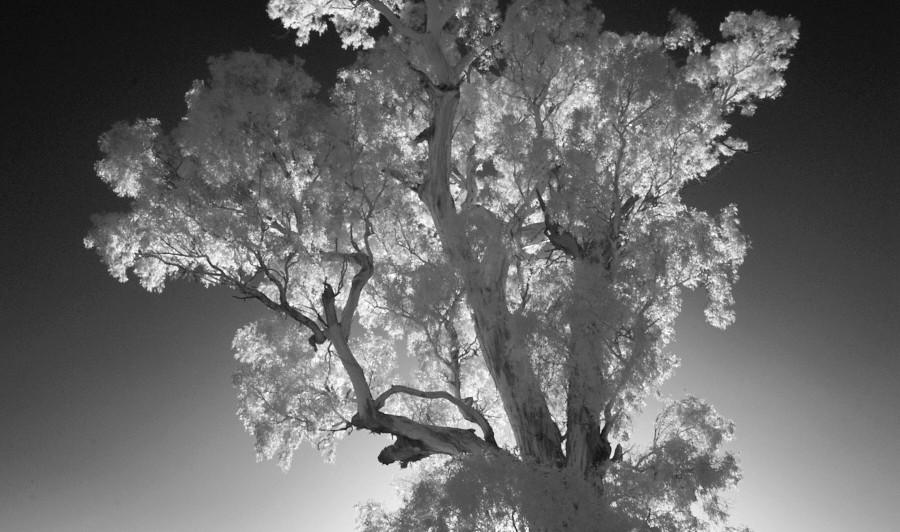 Silver Light, Kimo Estate NSW