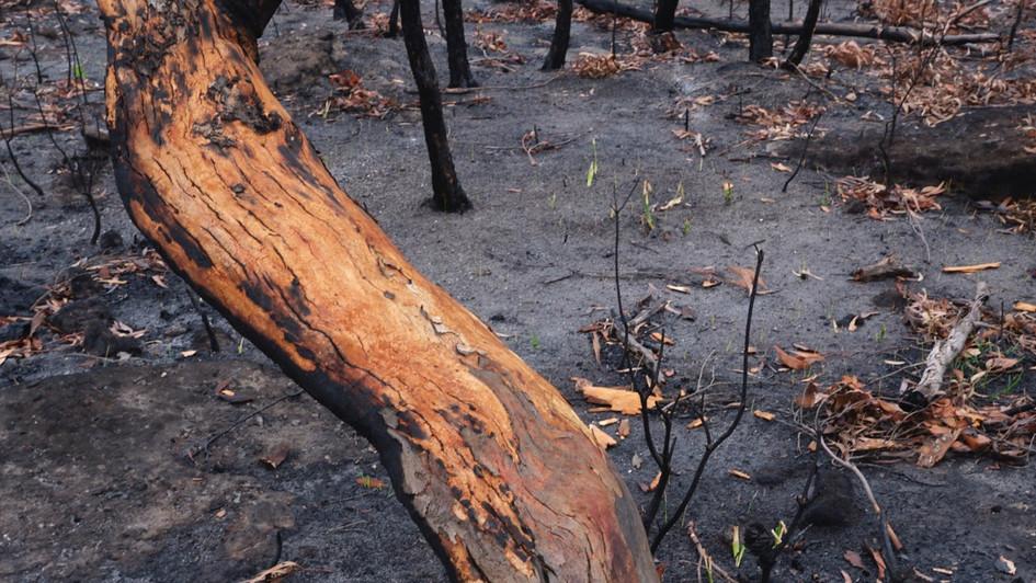Skeletal, Morton National Park NSW