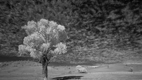 Feather Sky, Kimo Estate, NSW