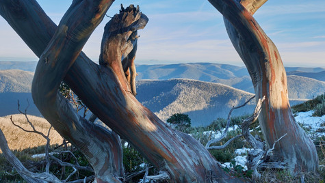 Snowgum View, Alpine National Park, Victoria Australia