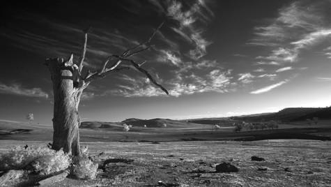 Drought, Gundagai, NSW