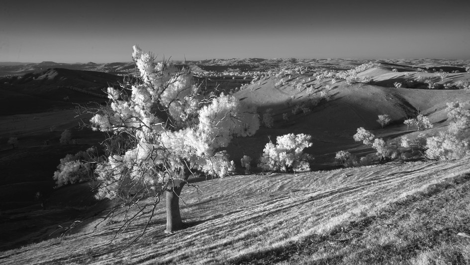Rolling Hills, Kimo Estate, NSW