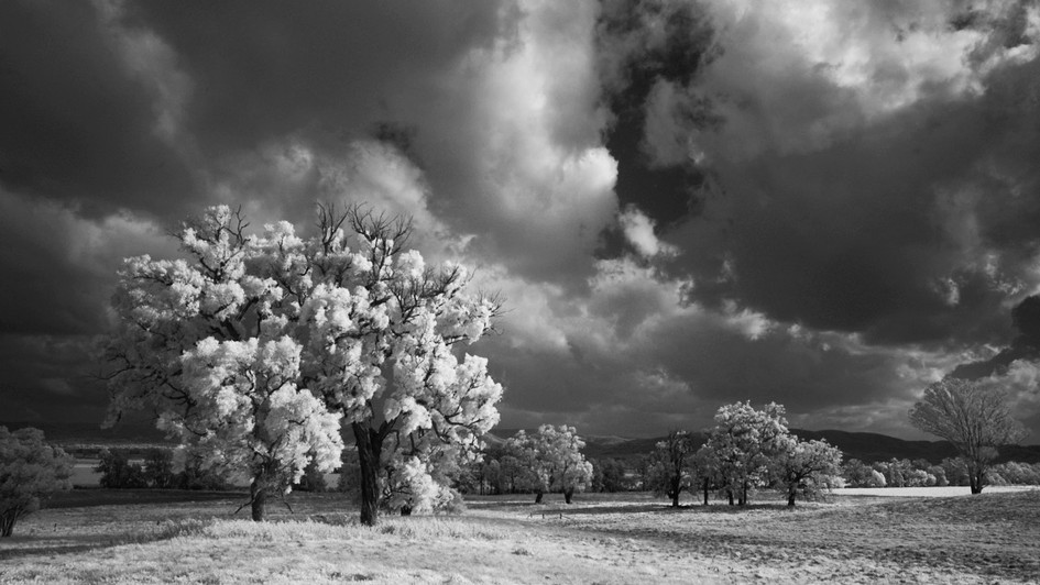 In the Limelight, Mudgee NSW