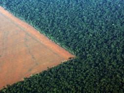 O Ecocídio – Um Crime da Humanidade, Sobre a Humanidade.