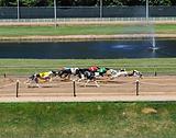 Greyhound park.PNG