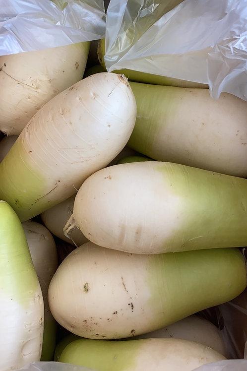 Korean Green Radish Molli 韩国青白萝卜1000-1200g