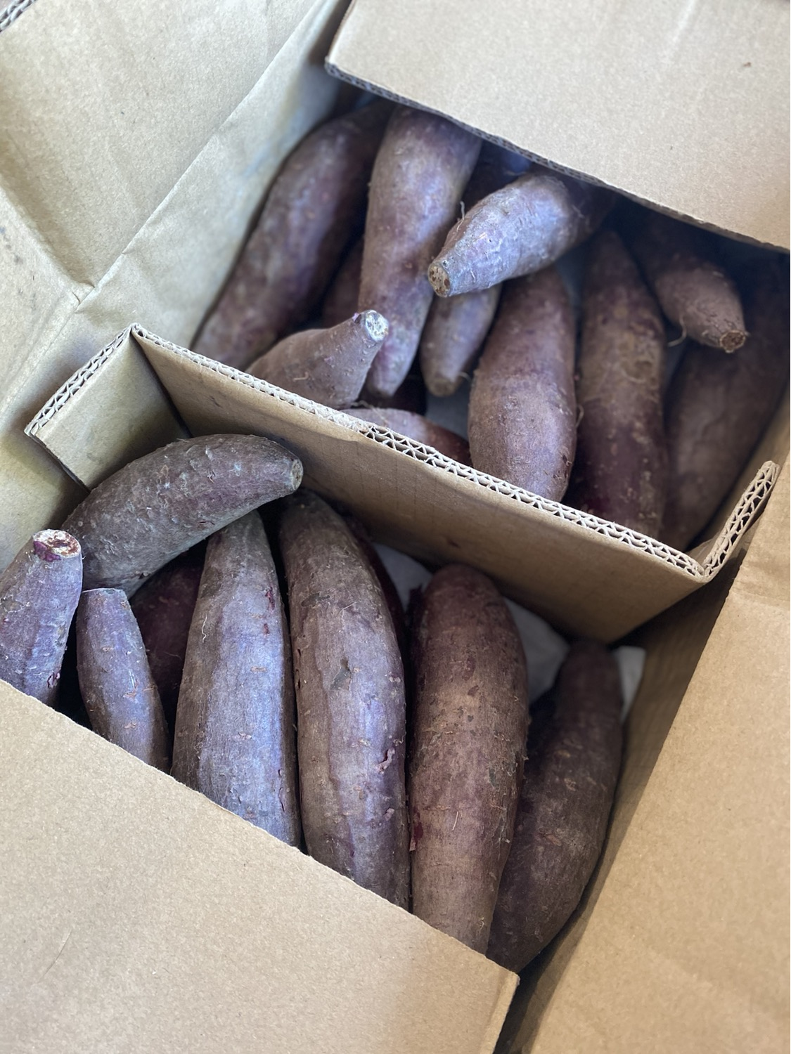 Purple Sweet Potato 500g紫薯(will back in Tuesday)