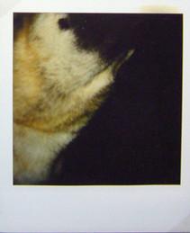 Première 1999