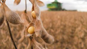 Com atraso em embarques do Brasil, setor de soja da China deve reduzir processamento