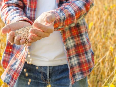 Com quase 10% colhida e ajuste para menor na área, safra da soja deve superar 11,2 milhões/ton