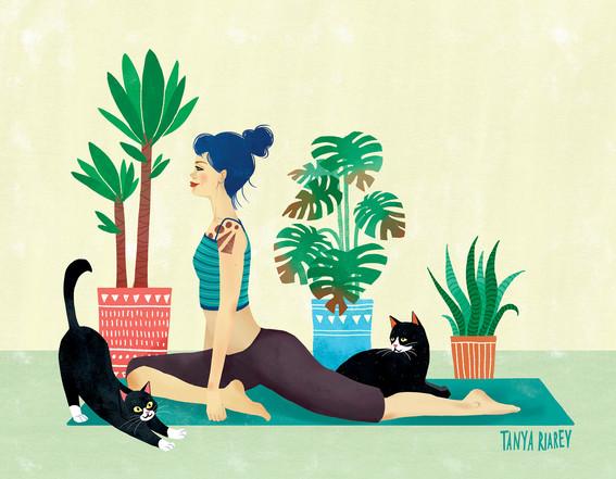 cat-yoga1.jpg
