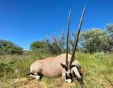 Free Range Oryx
