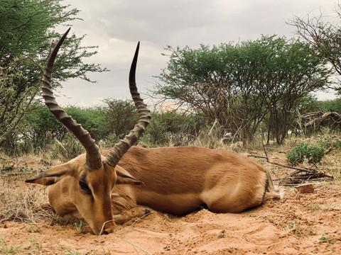Impala Hunting in Namibia with Zana Botes Safari