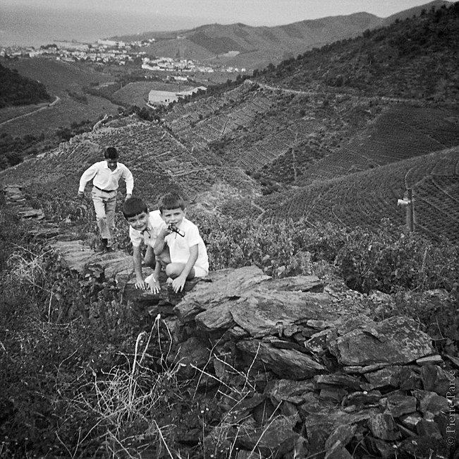 rectorie boys in vineyard.jpg