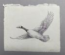 Flying Goose