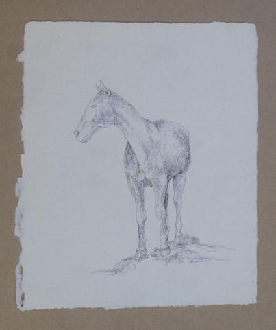 Standing Horse II