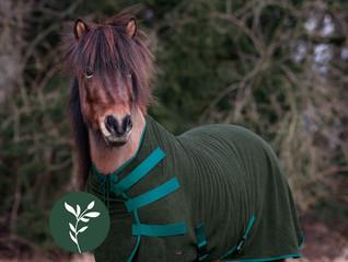 Eine Pferdedecke aus Wolle – Was ist eigentlich Loden und warum ist eine Wolldecke gut fürs Pferd?
