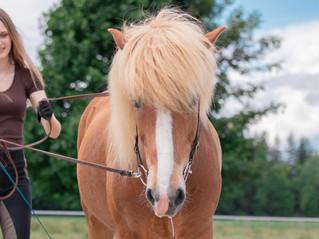 Zwangspause vom Reiten: Mit Bodenarbeit Muskeln und Kopf eures Pferdes fit halten