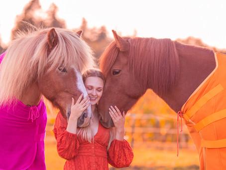 Pferdekauf: Wie finde ich mein Traumpferd?