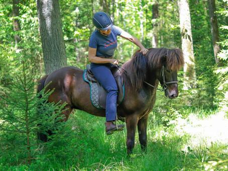 Welche Ausrüstung brauche ich wirklich für mein Pferd?