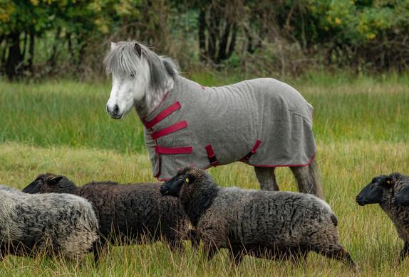 Abschwitzdecke-Wolle-Ökologisch-Grau-Rot