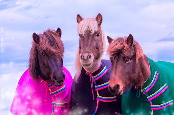 Abschwitzdecke-Sportsfreund-Hochgeschlossen-Islandpferde