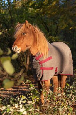 Abschwitzdecke-Islandpferde-Wolle-Ökologisch