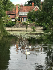 Kelly Lauer/Mill Cottage Swans