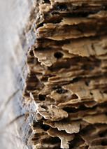 Résistant_aux_termites_.png
